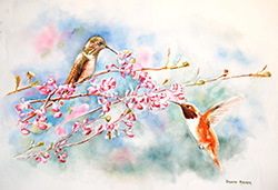 Rufous Hummingbirds In Spring